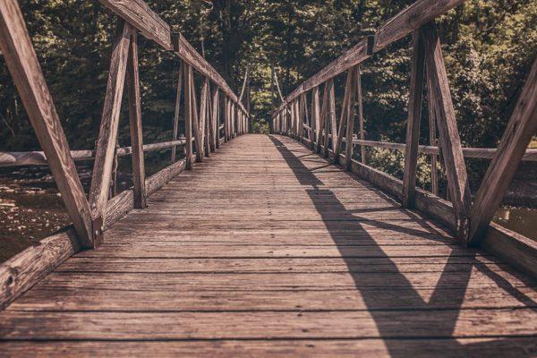 leśny most