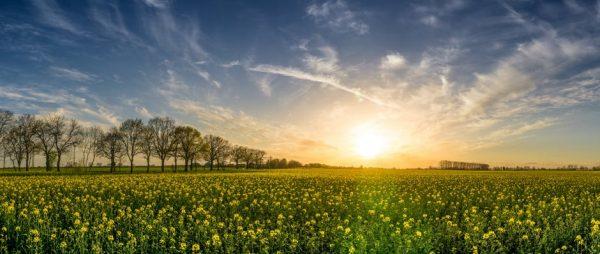Słońce nad łąką