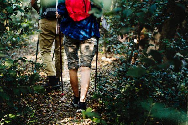 wędrówka przez las