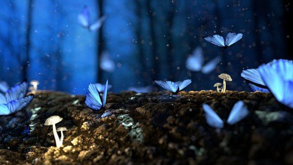 Motyle, natura, las