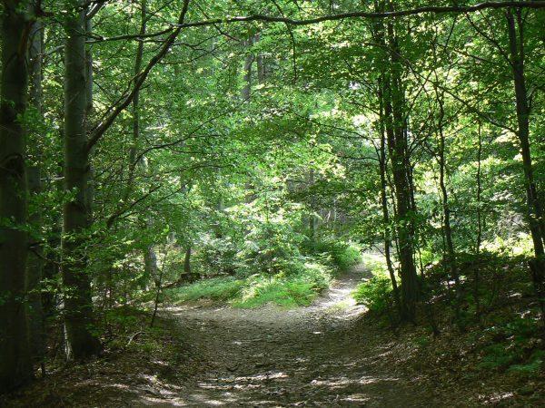 na rozstaju leśnych dróg