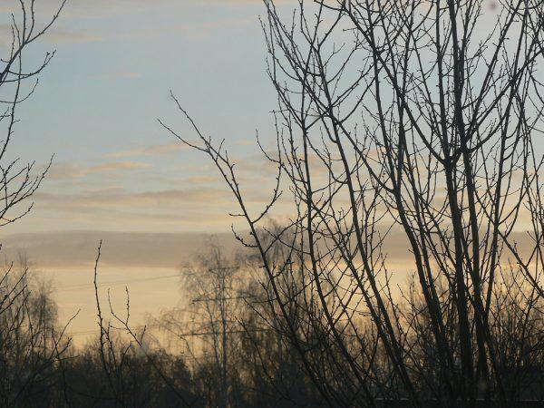 drzewa o poranku