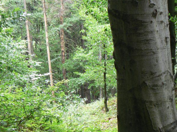 las, drzewo, lato