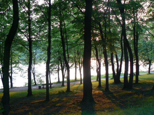 park, drzewa, staw