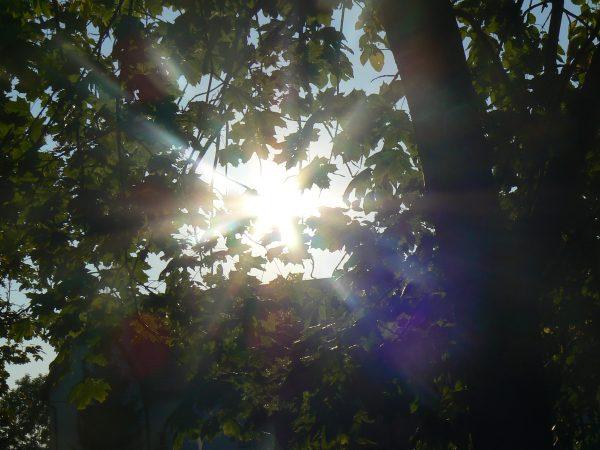 słońce wśród liści