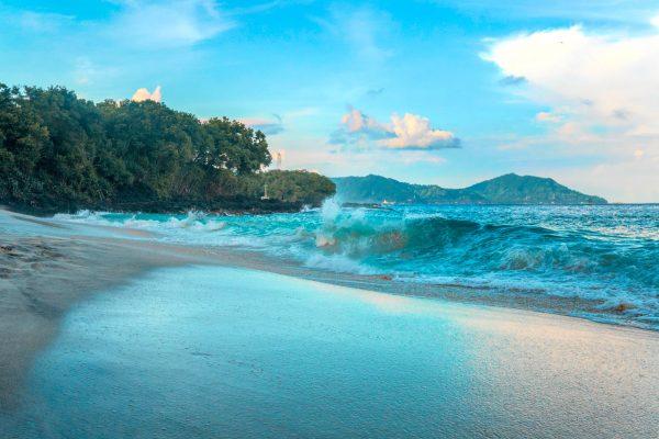 fale, morze, wybrzeże, drzewa