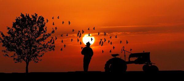 Rolnik na polu i zachodzące słońce